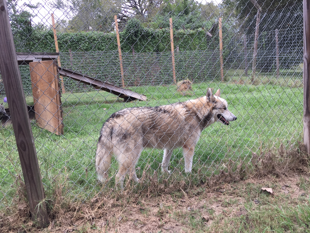 Saint Francis Wolf Sanctuary