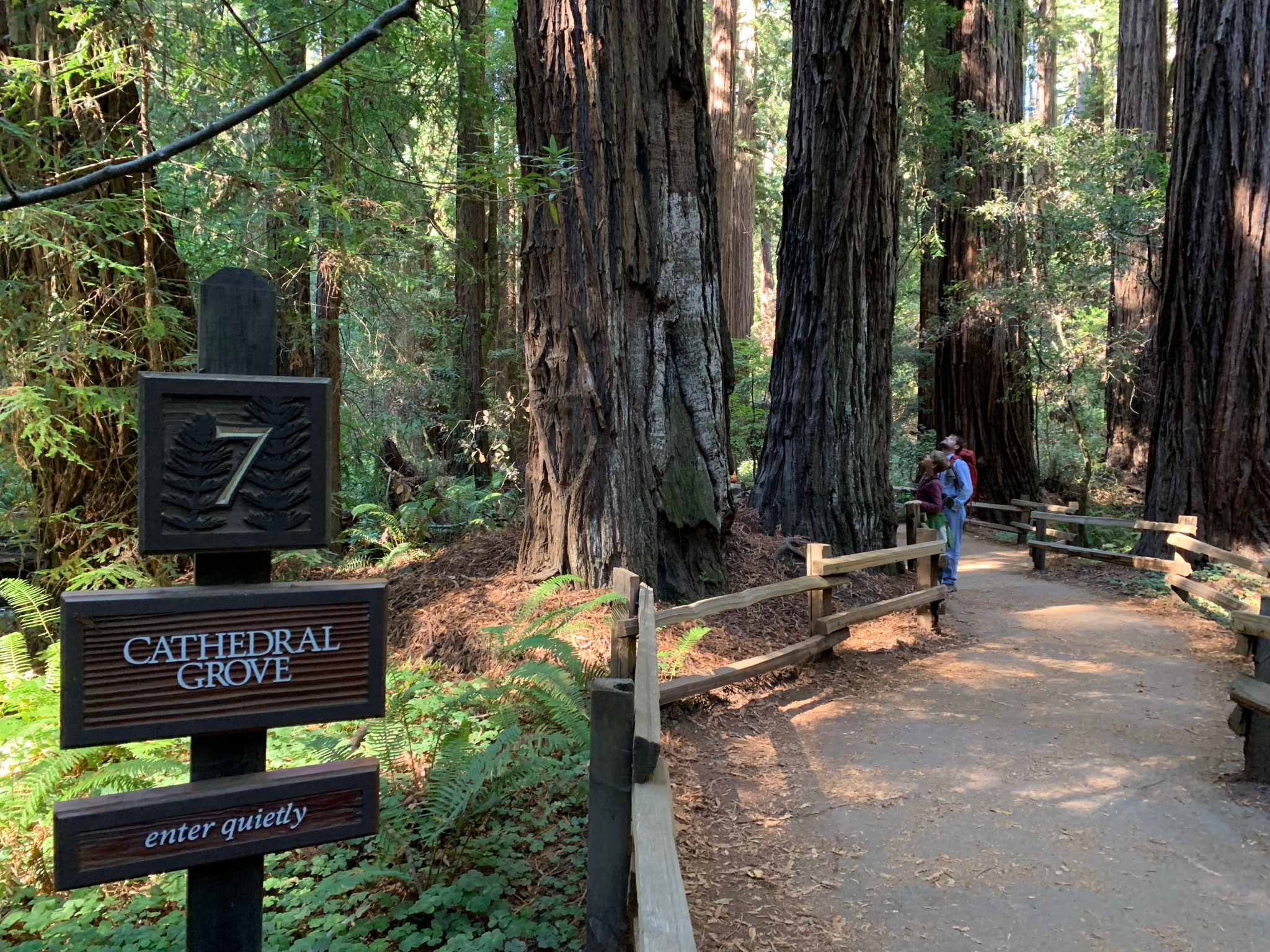 Cathedral Grove Muir Woods