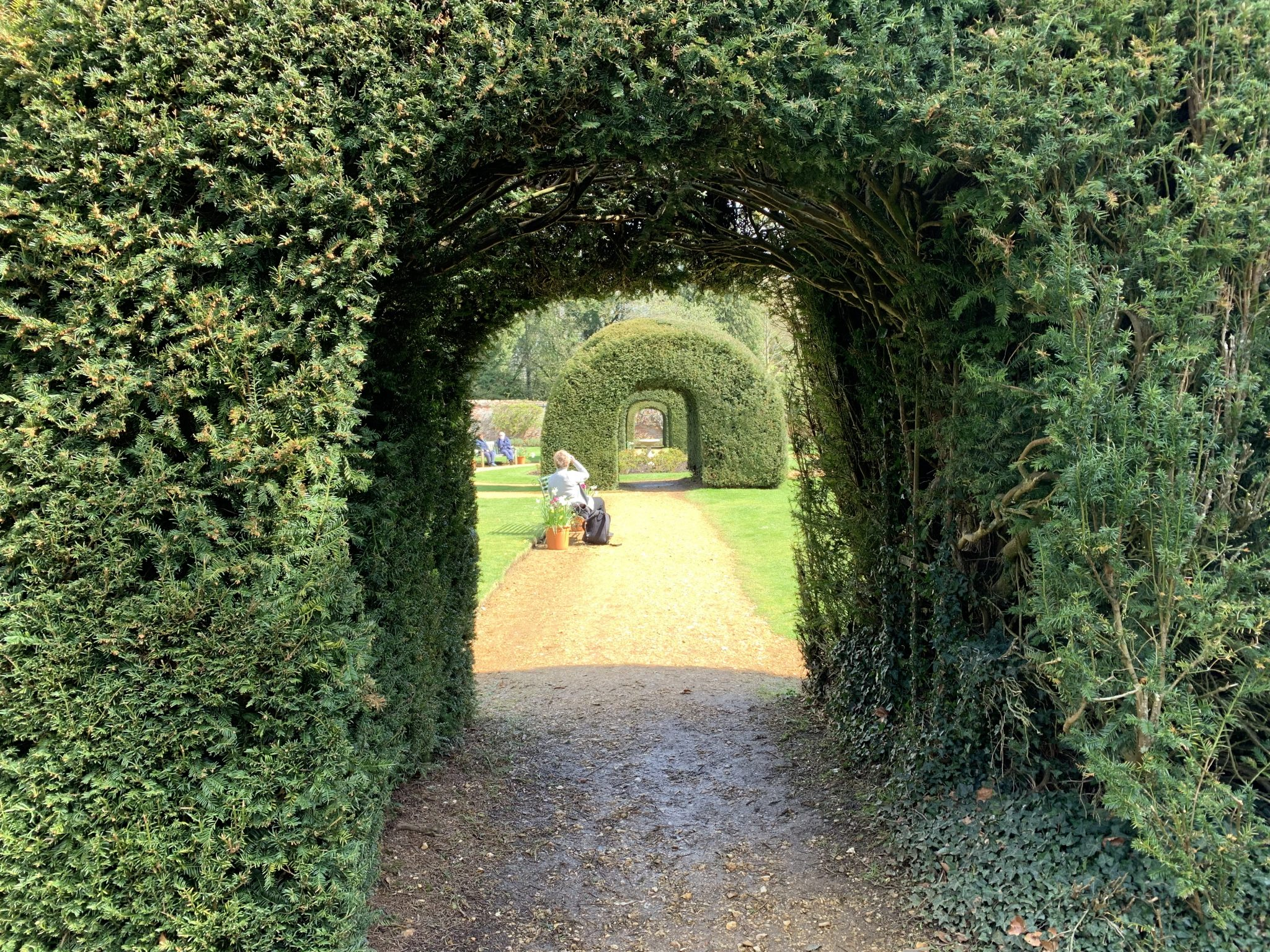 Monks Garden Hedge Tunnel