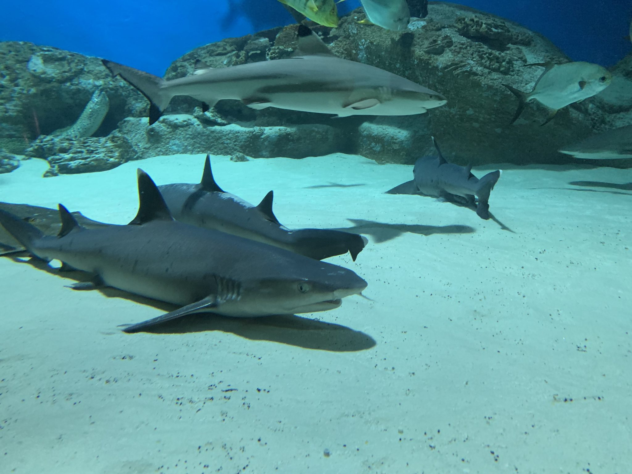 Sharks Moskvarium